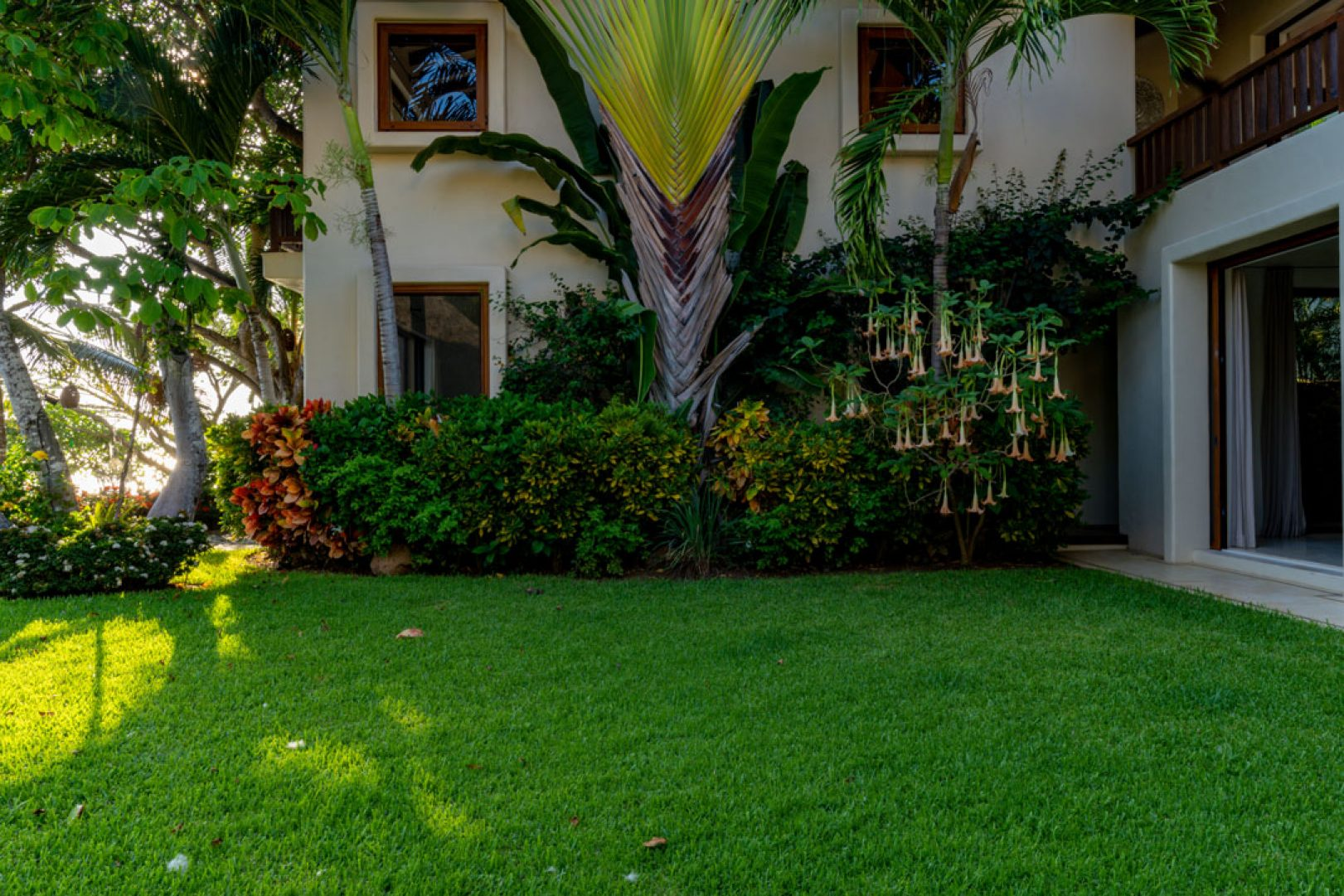 Garden view from palapa